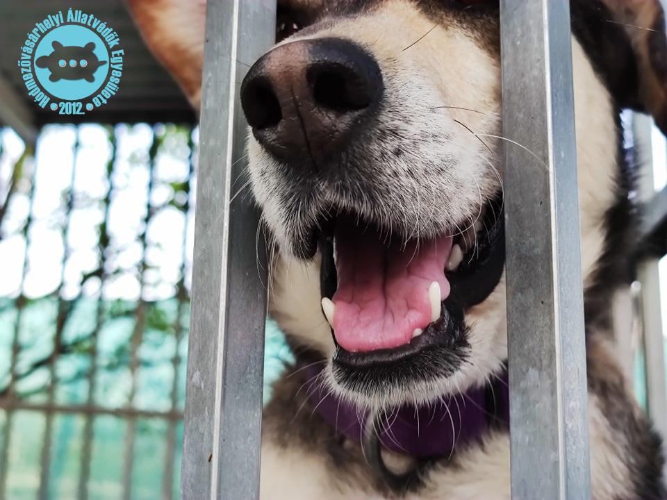 Önkéntesként, szabadidejükben, magánéletük mellett foglalkoznak állatvédelemmel